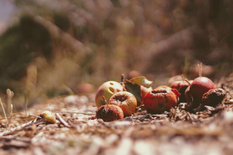 """Wie viel """"roh"""" steckt noch in getrockneten Früchten?"""