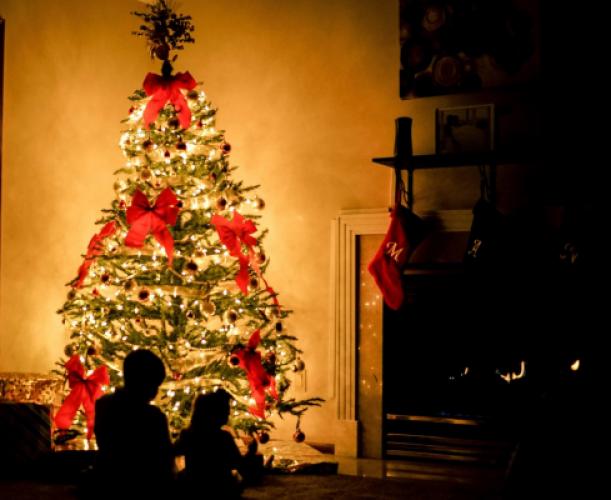 Lebendiger und nachhaltiger Christbaum