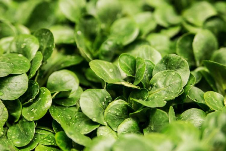 5 gute Gründe für die Rohkost-Ernährung