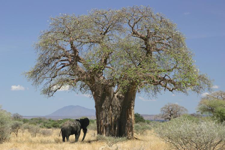 5 Möglichkeiten, wie Baobab dein Leben verbessern kann