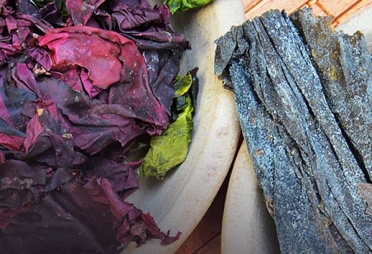 Wie Algen deinen Speiseplan bereichern