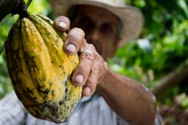 Das Superfood der alten Götter: Kakao