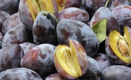 Pflaume - Steinfrucht für den Herbst