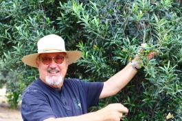 Oliven – Nährstoffbombe des Olivenbaumes