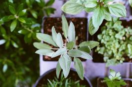 Zum richtigen Zeitpunkt aussäen und anpflanzen