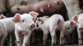 Veganismus - aus ethischer Sicht