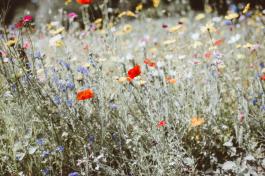 Heute feiern wir den Tag der biologischen Vielfalt